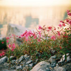 Flowers on film