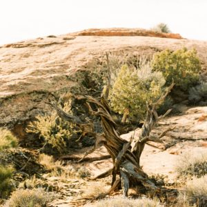 New Year Print Series + Bristlecone Pine